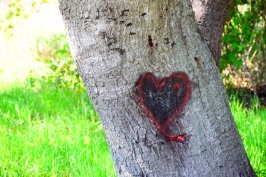 Tree with Heart Carved in Trunk