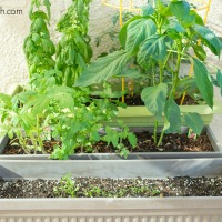 Our Family Veggie Garden: Update & Care Tips